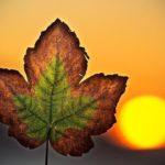 10 эффективных способов избавления от хандры и депрессии